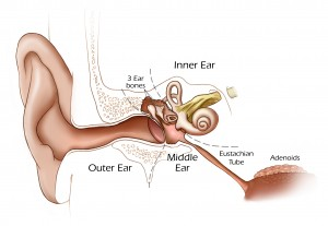 Ear-Diagram-300x207